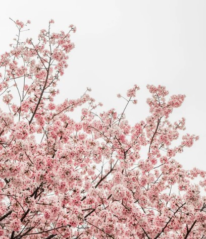 facts about spring