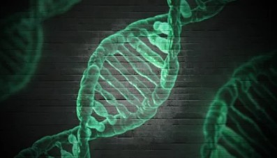 Cool DNA facts