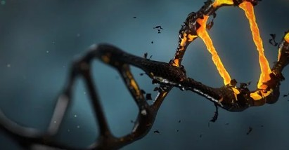 amazing facts about DNA